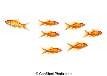 go your own way goldfish concept