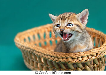 Adorable kitty in basket - adorable baby cat in basket with...