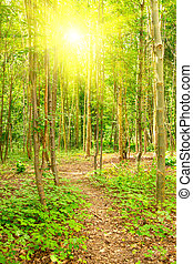 Morning forest with a footpath and sun beams