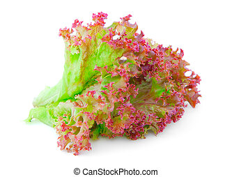 Red Oak lettuce leaves on a white background