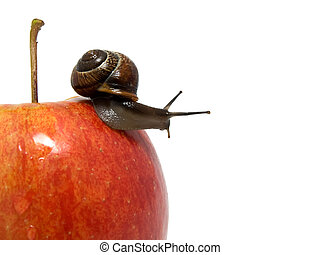 snail creep on a red apple on white background.