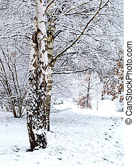 Paradise view of winter with trees covered by snow