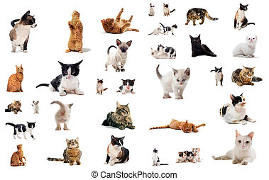 cats in studio - cats and kitten on a white background