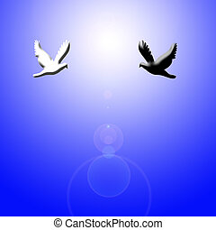 black and white dove flying to light