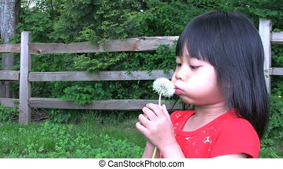 Dandelion Fun - A cute little Asian girl tries and tries to...