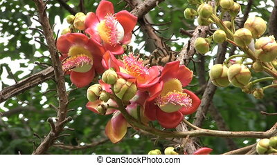 Exotic Flower From Thailand - A crazy exotic flower found on...