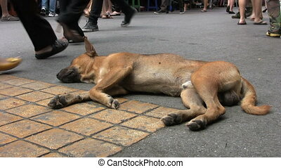 Dog Resting On The Street
