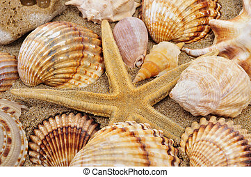 seashells and seastar - a pile of seashells and a seastar on...