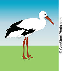 Stork - Illustration of stork - vector