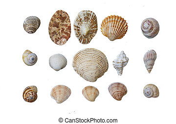 shell collection isolated