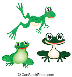 Illustration green frog on white