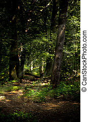 Path in the forest with light beams