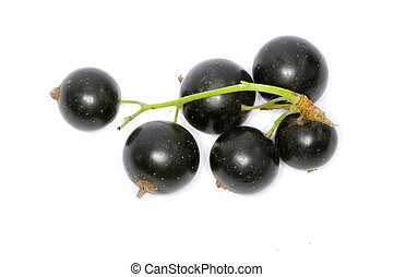 currant - branch of black currant fruits isolated on white...