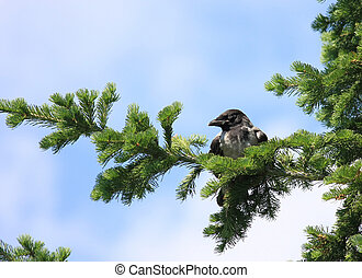 Young chick crows off from the nest