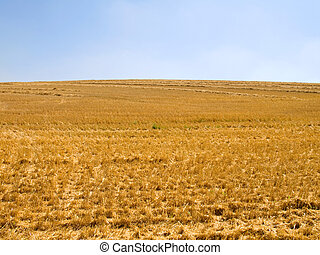 campo, Agricultura