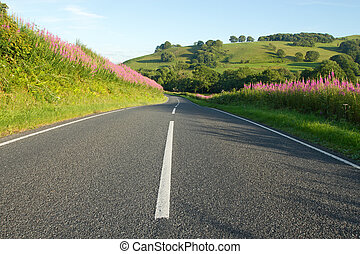 Country road in Wales with rosebay willowherb verges