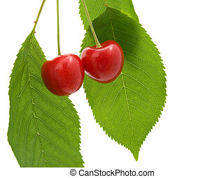 Two cherry with a green leaf on white background.