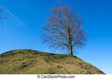 magányos, elhagyott, fa, füves, hegy