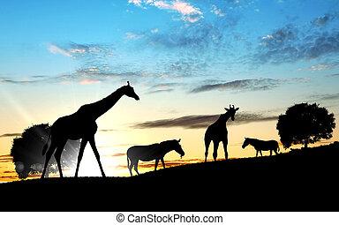 Girafffe agaisnt sky background - Picture of a giraffe...