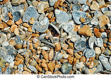 beach stones and shell background