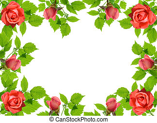 green leaflets and roses - frame from green leaflets and...
