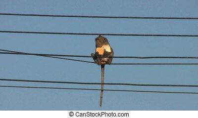 Monkey Eating Bread On A Power Line - A cute little monkey...