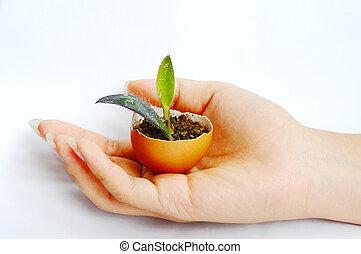 planta, mano