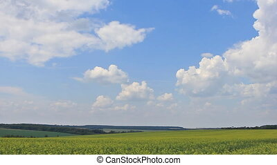Clouds on blue sky yellow field