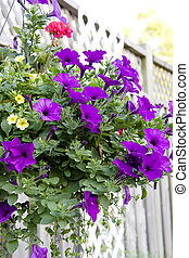hanging flower basket of purple petunia
