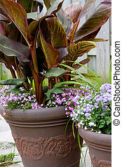 flower arrangment in the pots - canna lily in the brown pot