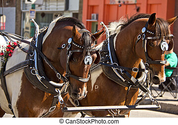 Two horses pulling a carriage at the 2011 Queen City Ex...