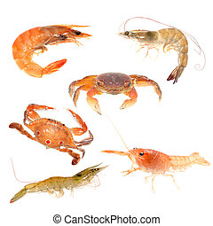 seafood animal crab crayfish shrimp set isolated on white
