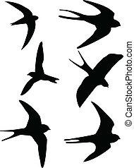 燕子, 黑色半面畫像