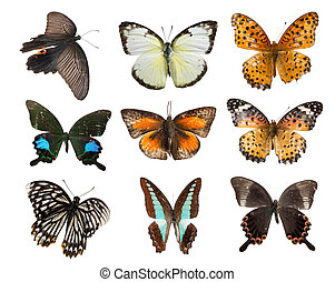 butterfly set collection isolated