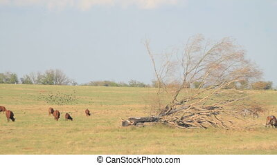 Meadow with grazing herd of cattle