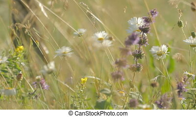 2 IN 1 EDIT White camomiles mixed with other wildflowers of...