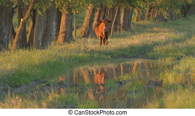 Brown calf standing in meadow near
