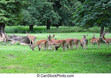 Herd of deer in a forest