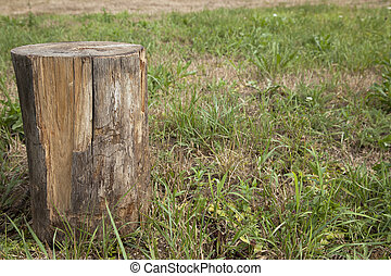 Tree Stump on grass background
