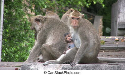 Monkey Family - A couple of baby monkeys stick close to...