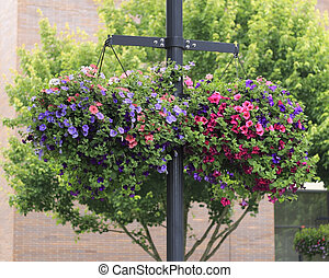 Flower Baskets Hanging - Two colorful flower baskets filled...
