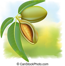 Almonds Branch with leaves and fruits Vector illustration