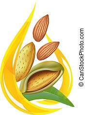 Almond oil. Stylized drop. Vector illustration on white...