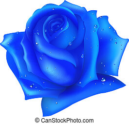 Blue Rose, Isolated On White Background, Vector Illustration