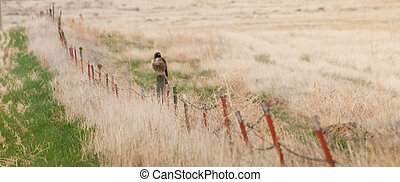 Red Tail Hawk - Red tail hawk on the fence in rural area.
