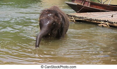 Baby Elephant Bathing In The River - An adorable baby...