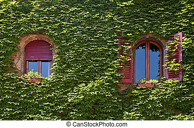 windows surrounded by creeping ivy plants