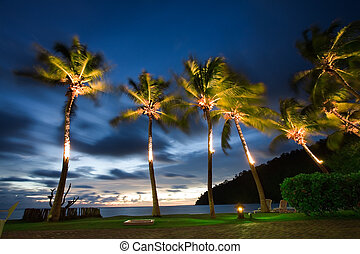 Tropical holiday - Palm trees move in the breeze of a SE...