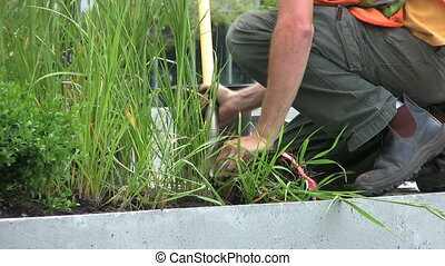 Planting Plants In Planter - A close up shot of a worker...