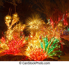 Bright Christmas Lights in a Cactus Garden - A desert garden...